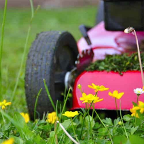 Les jardins normands votre paysagiste dans le calvados for Entretien jardin le quesnoy